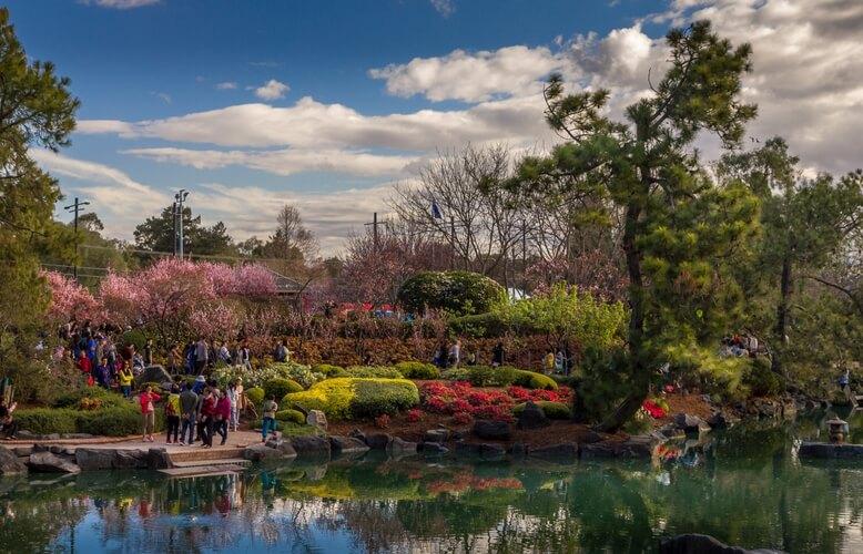Cherry Blossom Festival In Auburn Botanical Gardens Aussie Weekend