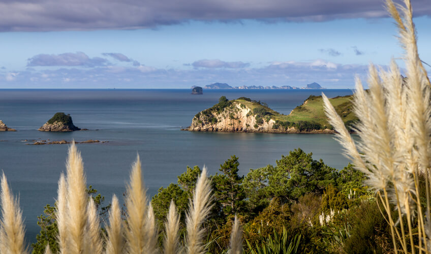 Track to Cathedral Cove