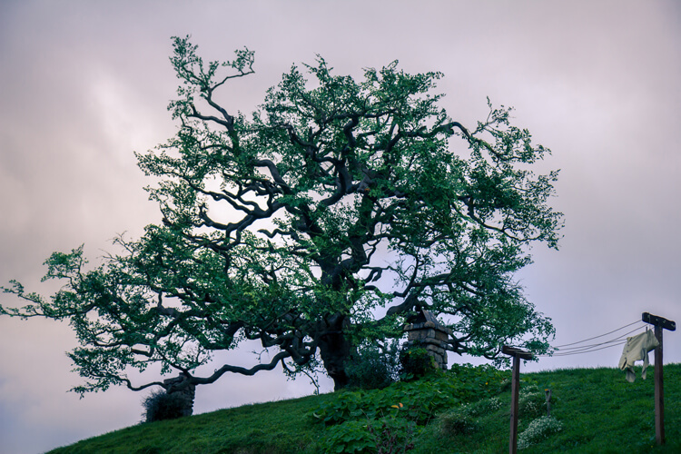 Hobbiton fake oak tree