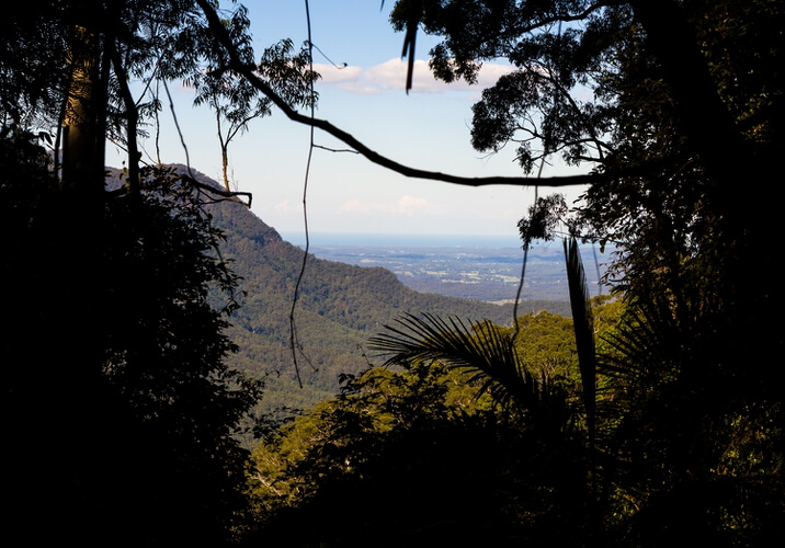 Wonga walk view, Dorrigo National Park
